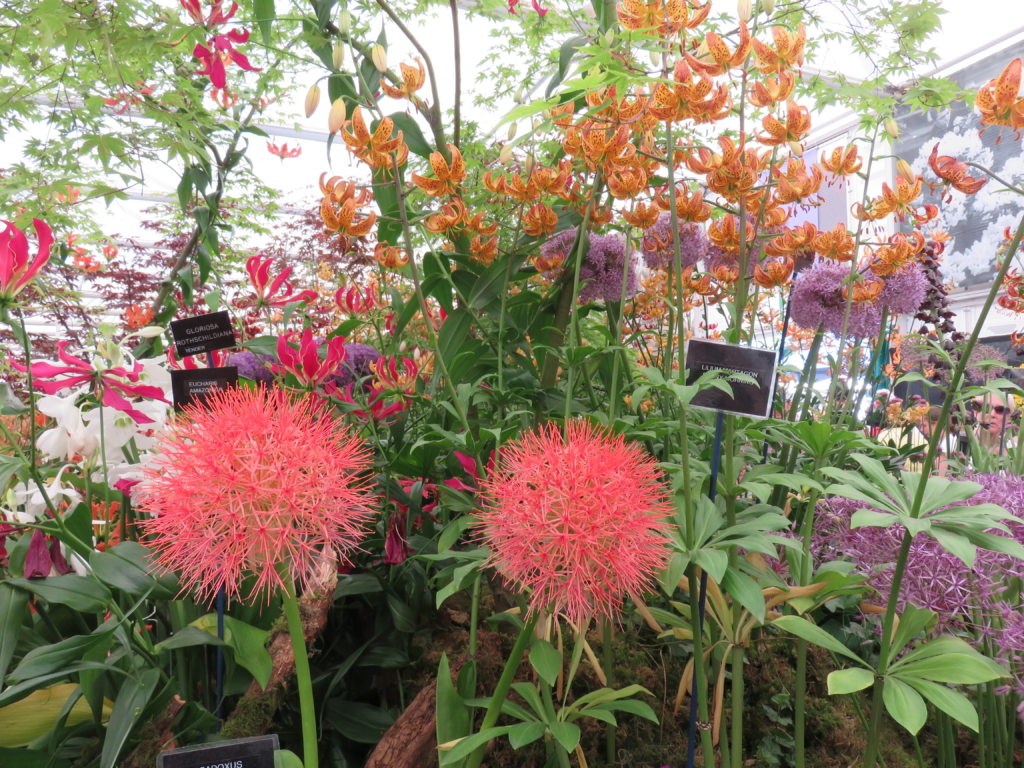 Visiting Chelsea Flower Show How Beautiful Life Is
